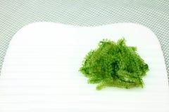 Alga marina oval fresca de las uvas Alimento sano imagen de archivo