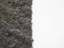 Alga marina seca en el fondo blanco imagen de archivo