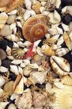 Alga marina, shelles y guijarros fotografía de archivo