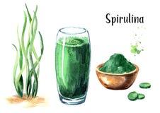 Alga marina Spirulina con el polvo, el smoothie y las tabletas Superfood Ejemplo dibujado mano de la acuarela, aislado en el fond stock de ilustración