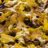 Alga marina y caracoles Foto de archivo