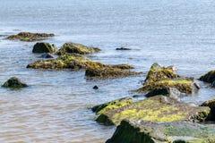 Alga marina y defensas costales de la roca cerca a la playa de la arena en Clacton en el mar, Essex, Reino Unido imagenes de archivo
