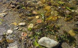 Alga marina y medusas imagenes de archivo