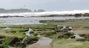Alga marina y quelpo en rocas de la playa imagen de archivo