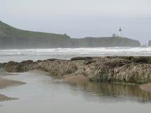 Alga marina y quelpo en rocas de la playa fotos de archivo