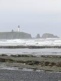 Alga marina y quelpo en rocas de la playa imagenes de archivo