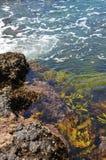 Alga na água imagens de stock royalty free