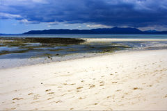 Alga na costa Fotografia de Stock