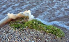 Alga na praia fotos de stock