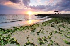 Alga na praia de Sanur Fotos de Stock Royalty Free