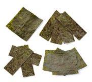 Alga no fundo branco imagens de stock