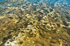 Alga no oceano Imagens de Stock