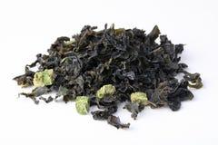 Alga secada. fotografia de stock royalty free