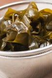 Alga in setaccio Immagini Stock