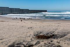Alga sulla spiaggia al parco di stato del giacimento del confine Immagine Stock