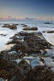 Alga sulle rocce Fotografie Stock