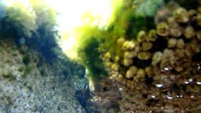Alga, underwater view stock video