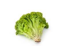 Alga verde Foto de Stock Royalty Free