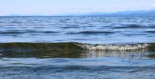 Alga vista na onda transparente que entra na praia em Parksville Canadá no passo de Geórgia fotografia de stock