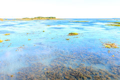 Alga and weed in lagoons Stock Photos