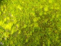 Algae fotos de stock royalty free