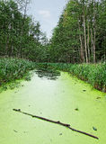 Algae湖。 免版税图库摄影
