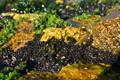 Algae Stock Images