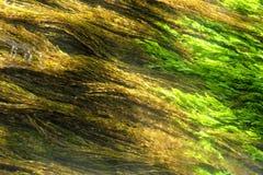 Free Algae  Stock Image - 42362731