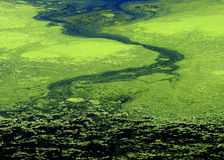 Algae abstract Royalty Free Stock Image