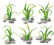 Free Algae And Stones Set Stock Photo - 44505410