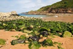 Algae on a beach stock photos