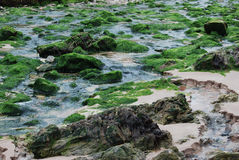 Algae on a beach Royalty Free Stock Images