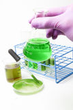 Algae biofuel technology Royalty Free Stock Photo
