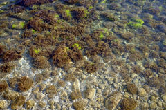 Algae in clear water. Stock Images