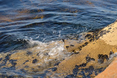 Algae in clear water in the rocky shore Royalty Free Stock Photos