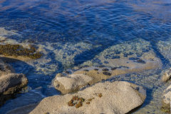 Algae in clear water in the rocky shore Stock Photography