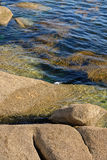 Algae in clear water in the rocky shore Stock Image