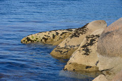 Algae in clear water in the rocky shore Stock Photos