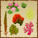 Algae and corals, decoration of the seabed Royalty Free Stock Image