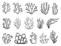 Algae and corals set sketch.  Royalty Free Stock Photo