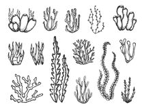 Algae and corals set sketch.  Stock Photography