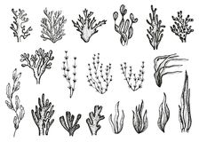 Algae and corals set sketch vector. Algae and corals set sketch vector illustration
