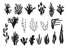 Algae and corals set vector Stock Photography