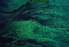 Algae cover. A pond is over run with sea weed and algae Royalty Free Stock Image