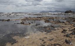 Beach covered with algae after storm wide. Algae cover the beach of son baulo in alcudia on the north side of the island of mallorca after some heavy summer royalty free stock photos