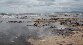 Rocky mediterranean beach covered with algae after storm. Algae cover the beach of son baulo in alcudia on the north side of the island of mallorca after some Stock Photos