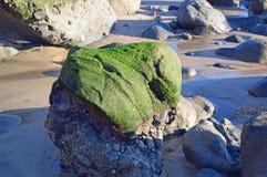 Algae covered boulder on shore of Cress Street Beach  in Laguna Beach, California. Stock Images