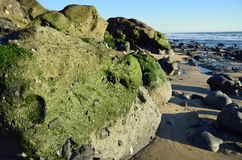 Algae covered boulder on shore of Cress Street Beach  in Laguna Beach, California. Stock Photography