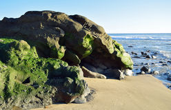 Algae covered boulder on shore of Cress Street Beach  in Laguna Beach, California. Royalty Free Stock Photography
