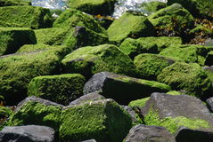 Algae covered dike stones Royalty Free Stock Image